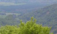 Un paisaje Nabarro