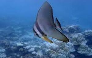 """Calentología: La """"conspiración"""" de las 'Siete """"plagas crueles""""' rescató a los peces marinos del respetado autor de 250 artículos científicos <br>[ru]"""