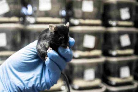 Los biólogos han aprendido a controlar las neuronas profundas con ultrasonido – Naked Science